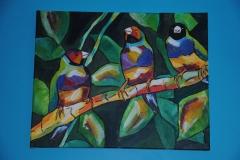 Oiseaux (2)